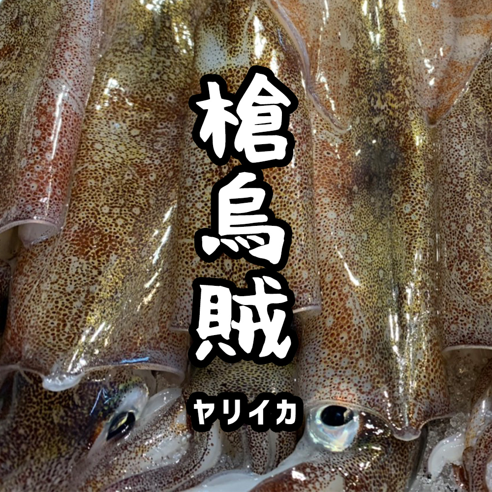 寿都産 ヤリイカ(5ハイセット)