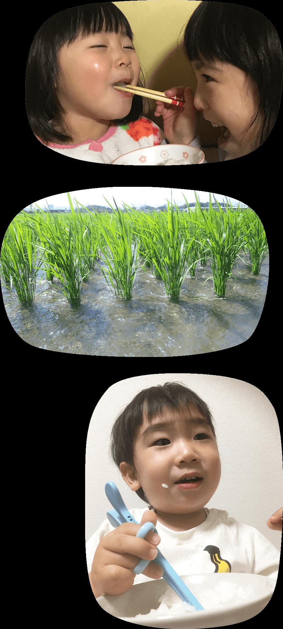 お子さんに笑顔で<br/>「おかわり!」して欲しい人へ。<br/><br/> 「美味しい!おかわり!」<br/> 食卓での笑顔をみると<br/>作ってよかったと嬉しくなります。<br/><br/> 稲にとって大切な栄養源である<br/> 「土づくり」に<br/> 通常よりも遥かに力を入れることで、<br/> お米の「美味しさ」を<br/> 引き上げる事ができました。<br/>