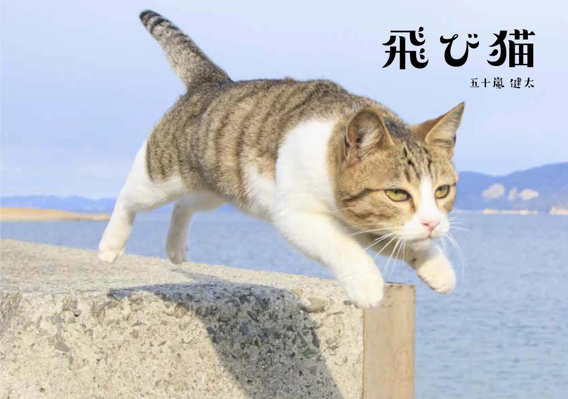 猫雑貨のお店 飛び猫商店紹介画像1