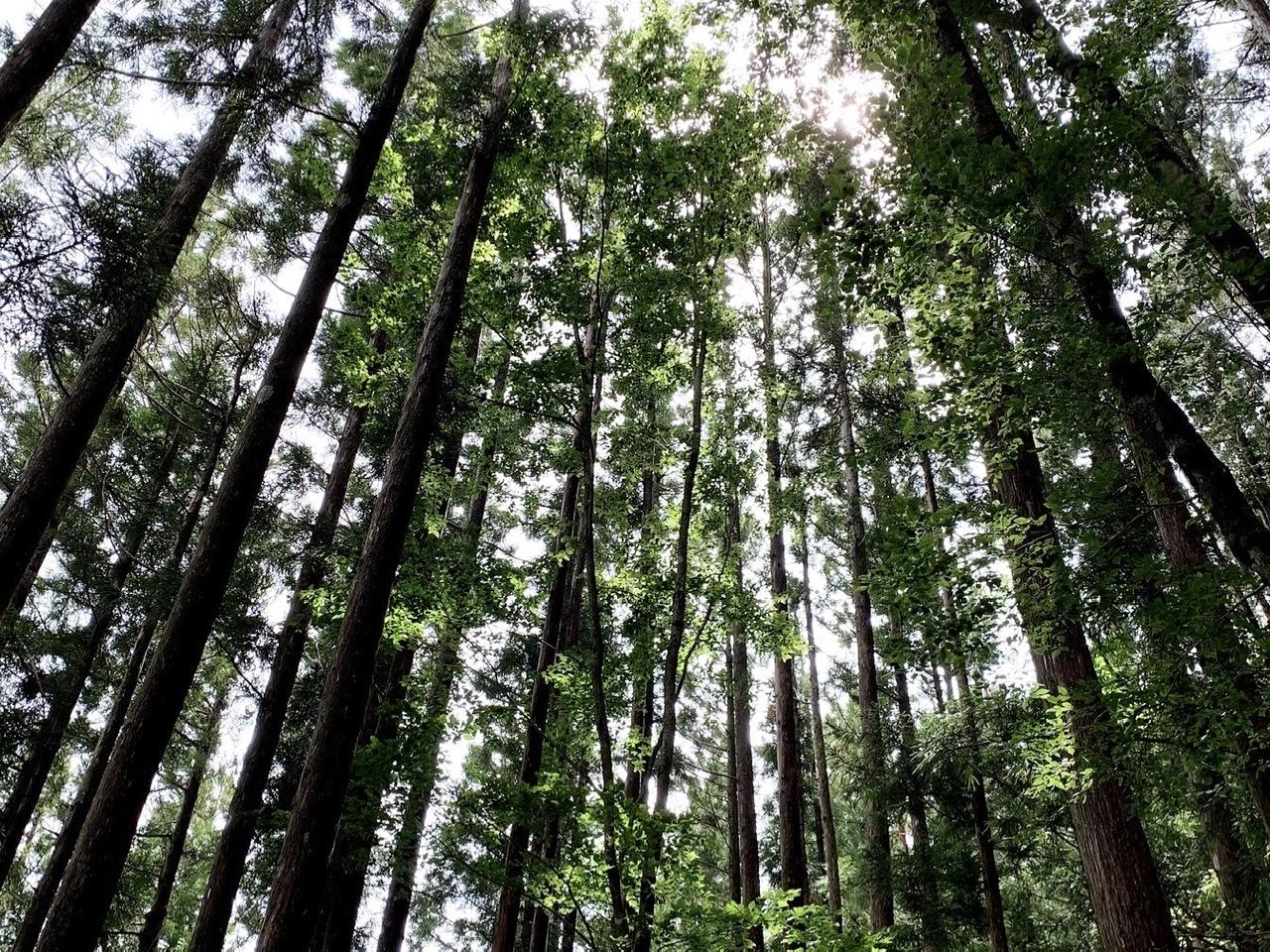 Tree water紹介画像1