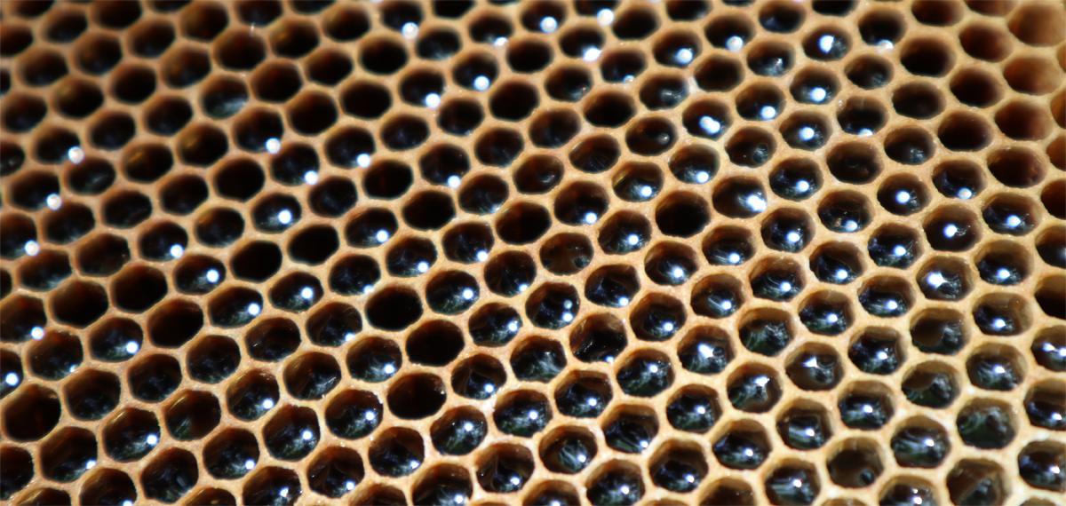梅田養蜂紹介画像1